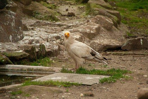 Bird, Ass, Animel, Wildlife, Zoo, Natur