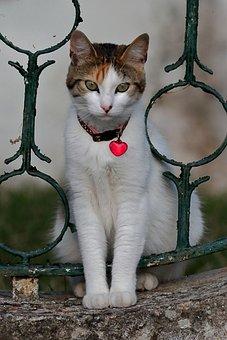 Cat, Feline, Tamed, Eyes, Animal