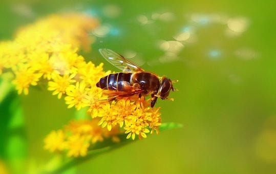 Apostate Resistant, Muchówki, Insect, Flower, Animals