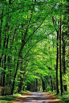 Nature, Landscapes, Forests, Park Of Gayeulles, Rennes
