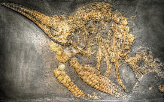 Ichthyosaurs, Dinosaur, Museum, Petrification, Fossil