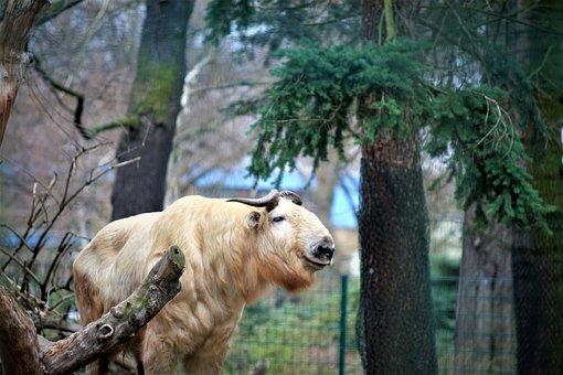 Zoo, Zoo Animel, Animel, Pictures, Dresden