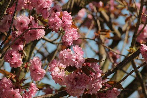 Flowers, Spring, Pink, Bloom, Macro, Petals, Season