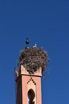 Sky, Stork, Nest, Bird, Nature, Storks, Birds, Blue