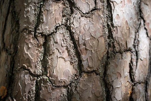 Wood, Log, Pile Of Wood, Bark, Brown, Nature, Structure