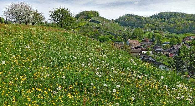 Landscape, Switzerland, Aargau, Birmenstorf, Nature