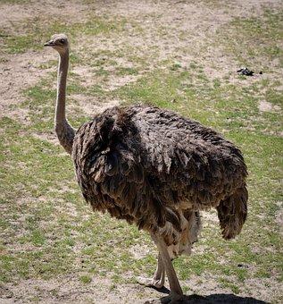 Zoo, Tiergarten, Tiergarten Nürnberg, Enclosure, Nature