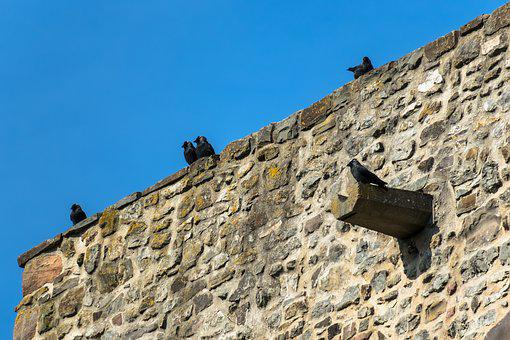 Castle Wall, Jackdaws, Watch, Wall, Castle