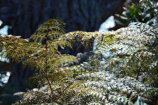 Okura Reserve, Water, Seaview, Wedding, Spring