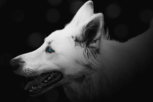 Dog, Pet, Cute, Animal, Canine, Happy, Breed, White
