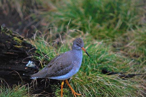Birds, Focus, Details Animel, Wildlife, Zoo, Dresden