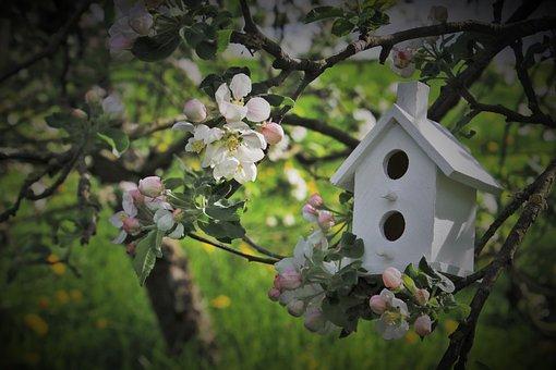Apple, Twigs, Trees Flowering, Garden, White, Green