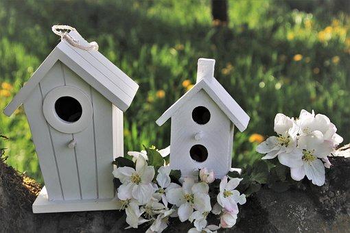 Apple, Branch, Blossomed, Cottage, For, Birds, Sad