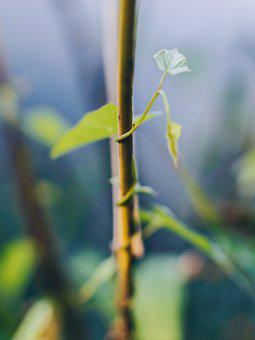 Macro, Detail, Nature, Green, Stem, Flower, Blade