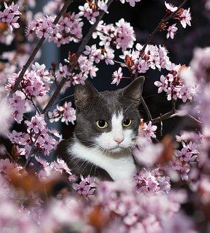 Cat, Domestic Cat, Animal, Cat's Eyes, Portrait