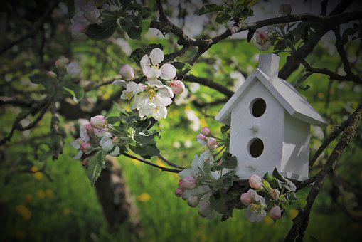 Apple, Twigs, Trees Flowering, Garden, White, Green