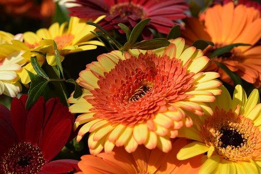 Flower, Plant, Spring-flowering, Garden