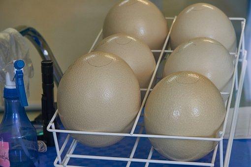 Egg, Ostrich Eggs, Incubator, Breed, Hatch, Nature