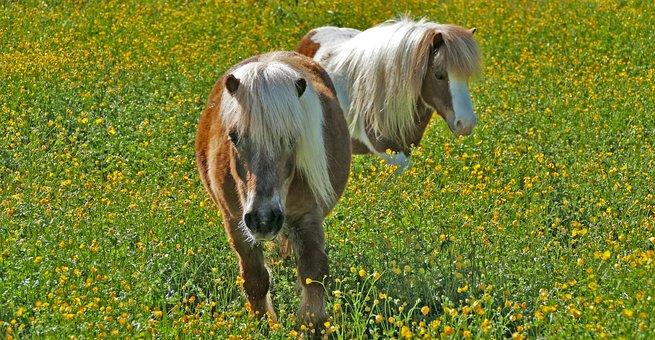 Landscape, Meadow, Animals, Ponies, Light, Grass