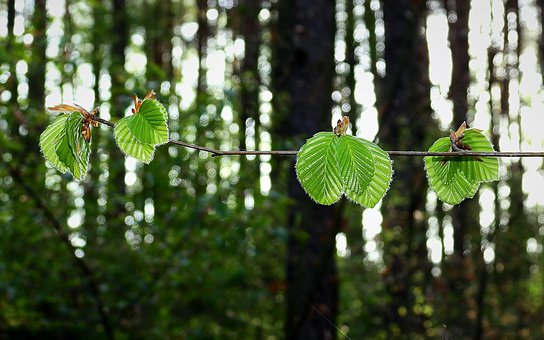 Forest, Foliage, Green, Nature, Spring