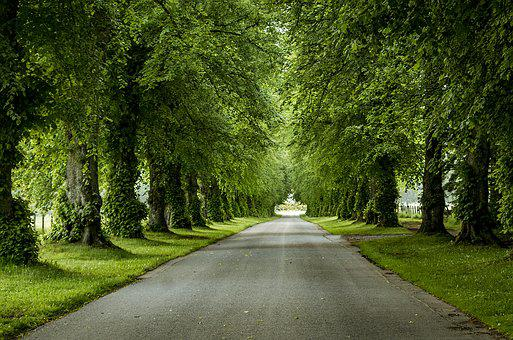 Avenue, Trees, Away, Nature, Leaves, Road, Rest