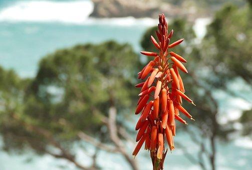 Red, Orange, Nature, Flower, Outlook, Mood, Beautiful