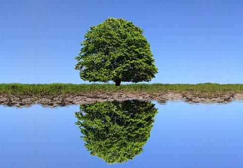 Tree, Lake, Sky, Reflection, River, Grass, Green, Blue