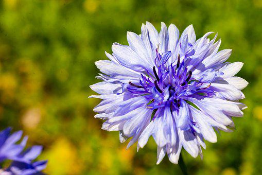 Flower, Nature, Macro, Blossom, Plant, Summer, Spring