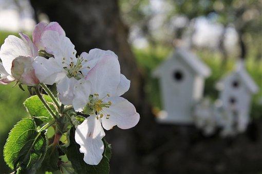 Flowers, Apple, Closeup, White, Sad, Morning