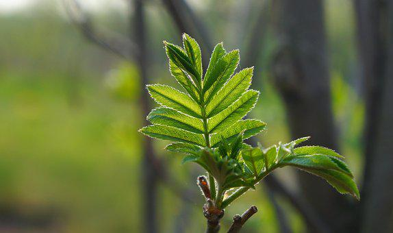 Nature, Plants, Tree, Branch, Green, Foliage, Young