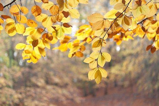 Foliage, Autumn, Forest, Nature, Colorful, Mood