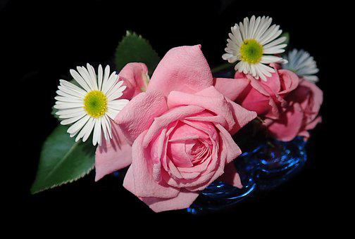 Flowers, Roses, Daisies, Vase, Garden, Nature