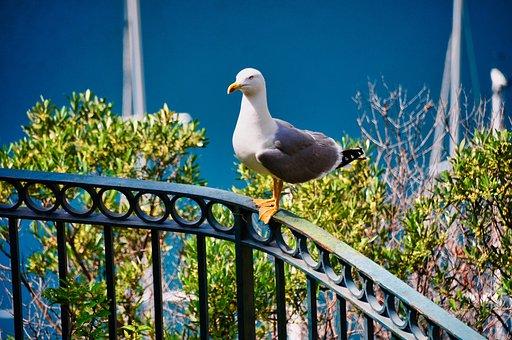 Seagull, Bird, Sea, Blue, Nice, Monaco, Holiday, Nature