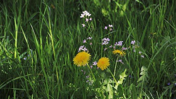 Green, Grass, Meadow, The Idyll, In The Shadows, Garden