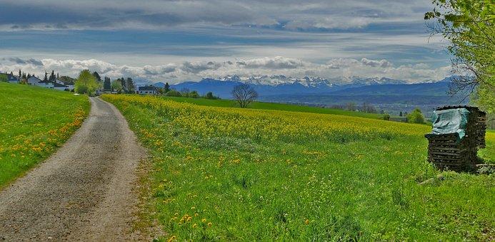 Landscape, Nature, Meadow, Grass, Away, Holzstapel