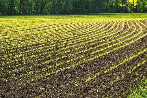 Field, Plant, Landscape, Agriculture, Harvest, Arable