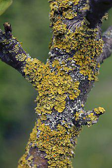 Lichen, Tree, Nature, Moss, Bark, Forest, Tribe, Log