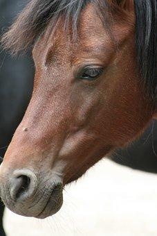 Horse, Portrait, Animals, Mammal, Ride, Pasture