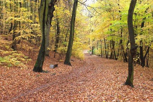 Forest, Park, Autumn, Landscape, Nature, Tree