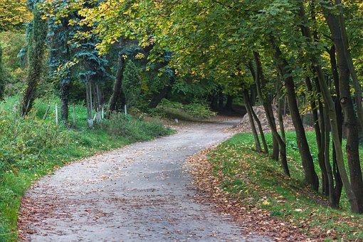 Park, The Path, Forest, Landscape, Tree, Nature