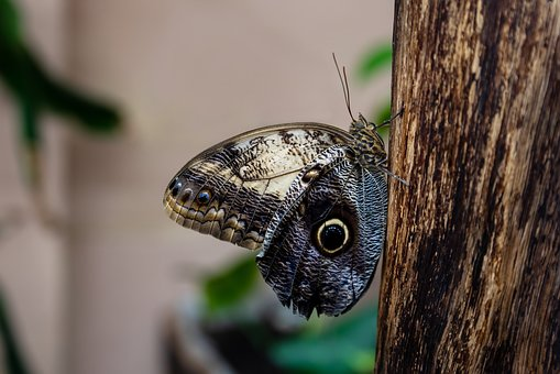 Butterfly, Motýlárium, Green, Wood, Flying, Tree, Sheet
