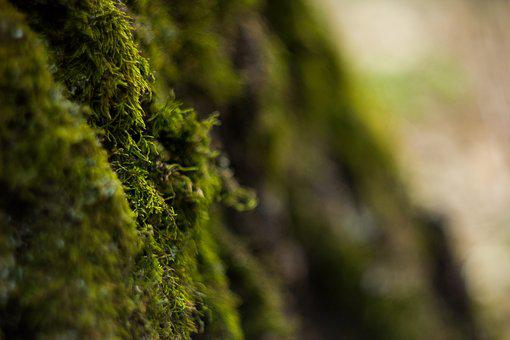Forest, Moss, Plant, Green, Nature, Tree, Trees