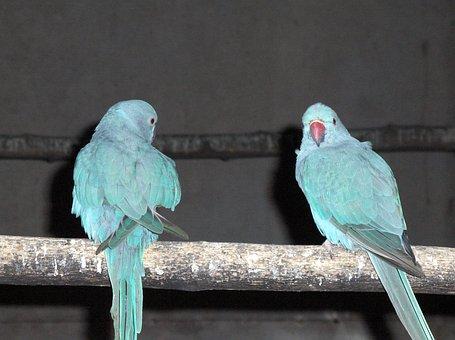 Bird, Tropical, Animal, Bangkok Safari Park, Thailand