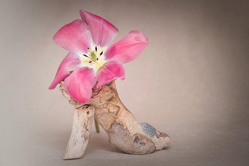 Flower, Tulip, Blossom, Bloom, Pink, Open Flower