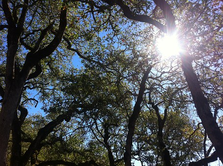 Oak, Oak Tree, Nature, Sky, Branches, Trees, Sun