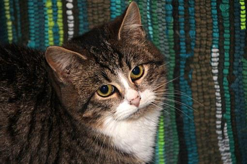 Cat, Kitten, Pet, Animals, Cats, Fur, Cute, Cat's Eye