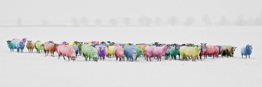 Sheep, Colorful, Colorized, Rainbow, Pantone