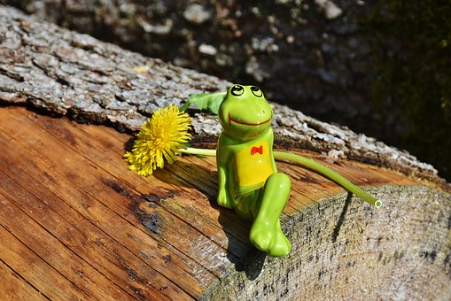 Frog, Funny, Fig, Cute, Nature, Sit, Relax, Enjoy, Tree