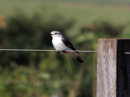 Nature, Bird, Tropical Birds, Encyclopedia, Environment