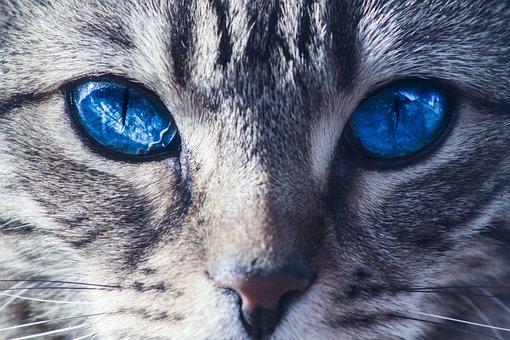 Cats, Eyes, Wild, Animal, Kitten, Domestic, Cute, Fur
